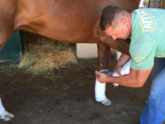Dr. Don Moore, who began working with California Chrome 18 months ago, checks the horse's right leg. (Photo courtesy of Don Moore)